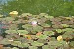 Zdjęcie na https://www.viapoland.com/ - portal informacyjny: Koncert, balet, wiersze w Ogrodzie Botanicznym gości Man Li Szczepańskiej