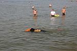 Zdjęcie na https://www.viapoland.com/ - portal informacyjny: Pokaz psów ratowniczych rasy Nowofundland