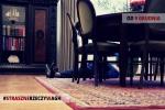 """Zdjęcie na https://www.viapoland.com/ - portal informacyjny: """"Archiwum Groźnych Historii"""" - premiera zbioru opowiadań kryminalnych o AGH"""
