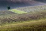 Zdjęcie na https://www.viapoland.com/ - portal informacyjny: Czeskie Morawy. Wiosenny plener z Tokiną dla miłośników krajobrazu