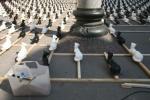 Zdjęcie na https://www.viapoland.com/ - portal informacyjny: Gronostaje na Placu Marii Magdaleny